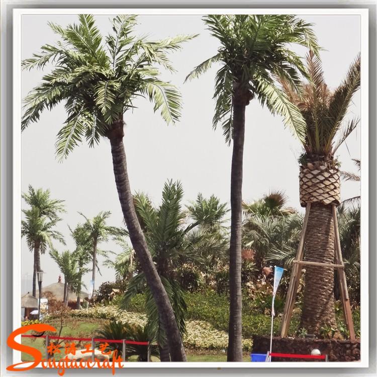 椰子树 (6).jpg