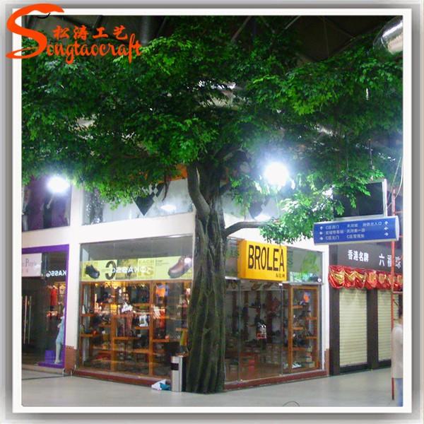 Ficus1 (31).jpg